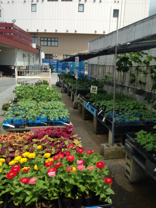 Just to the side of the market is this little nursery: flowers, herbs (couldnt find cilantro), and some veggies